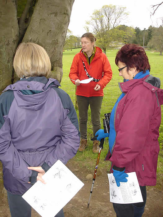 Lis Airey explains Beech tree crotches